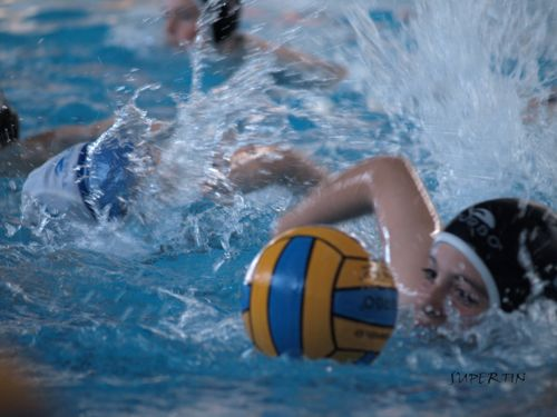 waterpolo desde benjamines a absolutos